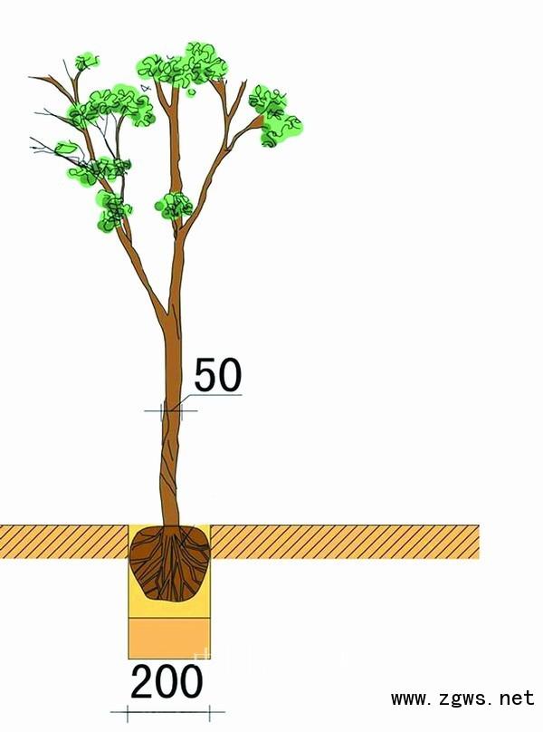 大树不可妄用