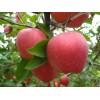 山东红富士苹果价格 红富士苹果网价格颜色加工