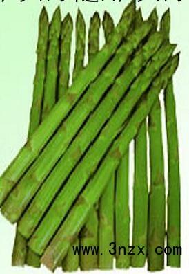 芦笋种子哪里有卖 2013芦笋种子价格 进口芦笋种子 