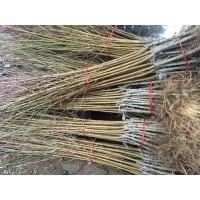 供应巴旦木树苗、山西优质巴旦木树苗培育基地